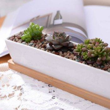Rectangular White Ceramic Bonsai/Succulents Plant Pots - Flower Pot Decoration 3