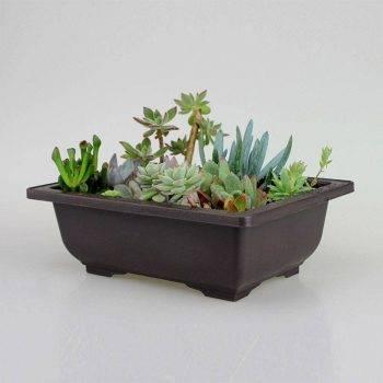 Rectangular/Square Brown Plastic Plant Pots For Bonsai/Cactus/Succulent - Flower Pot Decoration 2