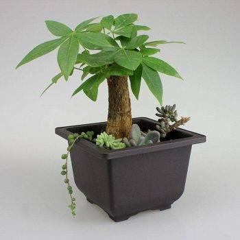 Rectangular/Square Brown Plastic Plant Pots For Bonsai/Cactus/Succulent - Flower Pot Decoration 1