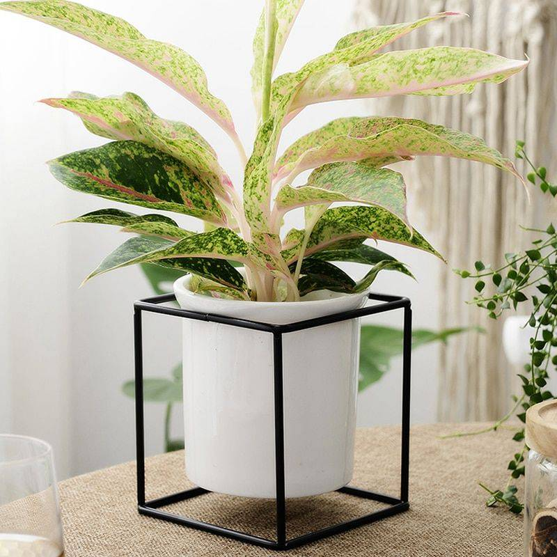 White Ceramic Pot Planter With Iron Tray – Flower Pot Hanging