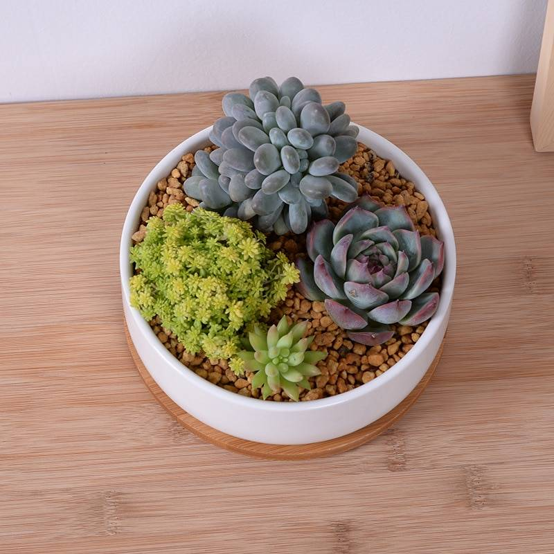 Small Circle White Ceramic Bonsai/Succulents Plant Pot – Flower Pot With Stand