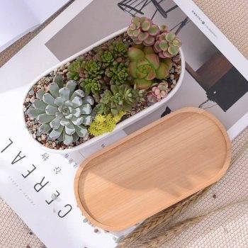 Oval White Ceramic Succulent/Bonsai Plant Pot - Flower Pot Decoration 4