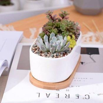Oval White Ceramic Succulent/Bonsai Plant Pot - Flower Pot Decoration 3