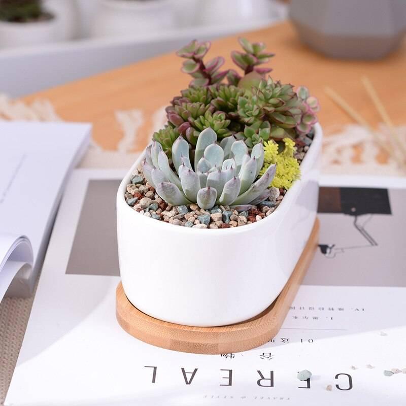 Oval White Ceramic Succulent/Bonsai Plant Pot – Flower Pot Decoration