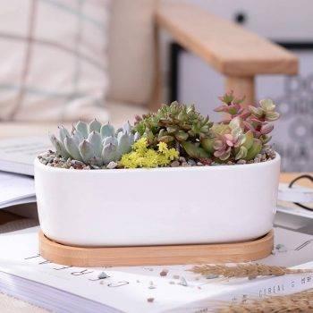 Oval White Ceramic Succulent/Bonsai Plant Pot - Flower Pot Decoration 2