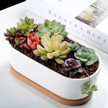 Oval White Ceramic Succulent/Bonsai Plant Pot - Flower Pot Decoration 5