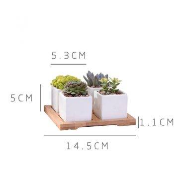 Set of 4 Minimalist Ceramic Succulent Planter Pot with Bamboo Stand - Small Flower Pots 4