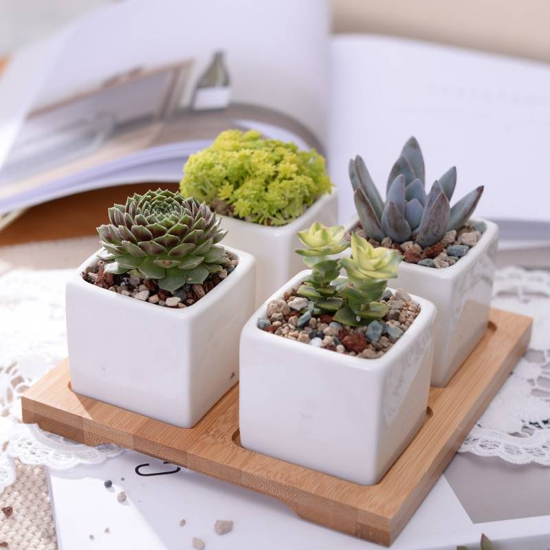 Set of 4 Minimalist Ceramic Succulent Planter Pot with Bamboo Stand - Small Flower Pots