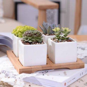 Set of 4 Minimalist Ceramic Succulent Planter Pot with Bamboo Stand - Small Flower Pots 3