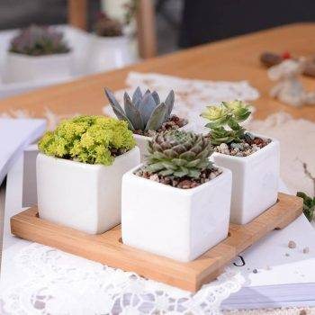 Set of 4 Minimalist Ceramic Succulent Planter Pot with Bamboo Stand - Small Flower Pots 2