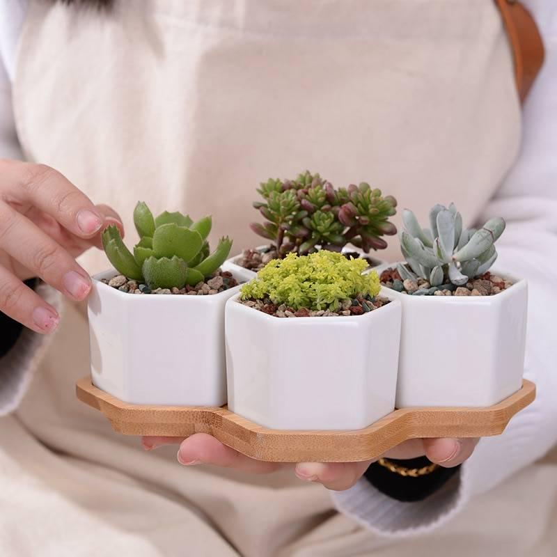 Set of 4 Hexagon Ceramic Flowerpots With Bamboo Stand – Succulent/Bonsai Plant Pots