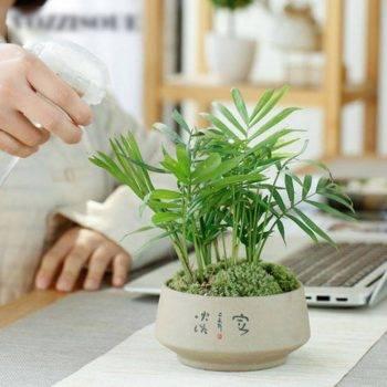 Chinese Style Ceramic Succulent Pots Planter - Mini Flower Pot For Home Decor 2