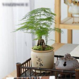 Chinese Style Ceramic Succulent Pots Planter – Mini Flower Pot For Home Decor