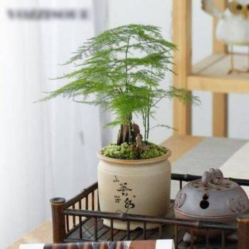 Chinese Style Ceramic Succulent Pots Planter - Mini Flower Pot For Home Decor 1